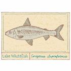 Whitefish Pâté